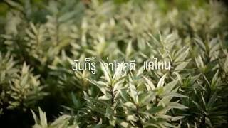 สิ่งของ - KLEAR「Unofficial Lyrics Video」