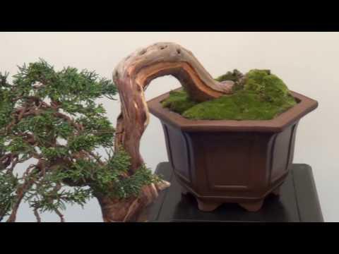 Narodowa wystawa bonsai - Zamek Książ - 2017