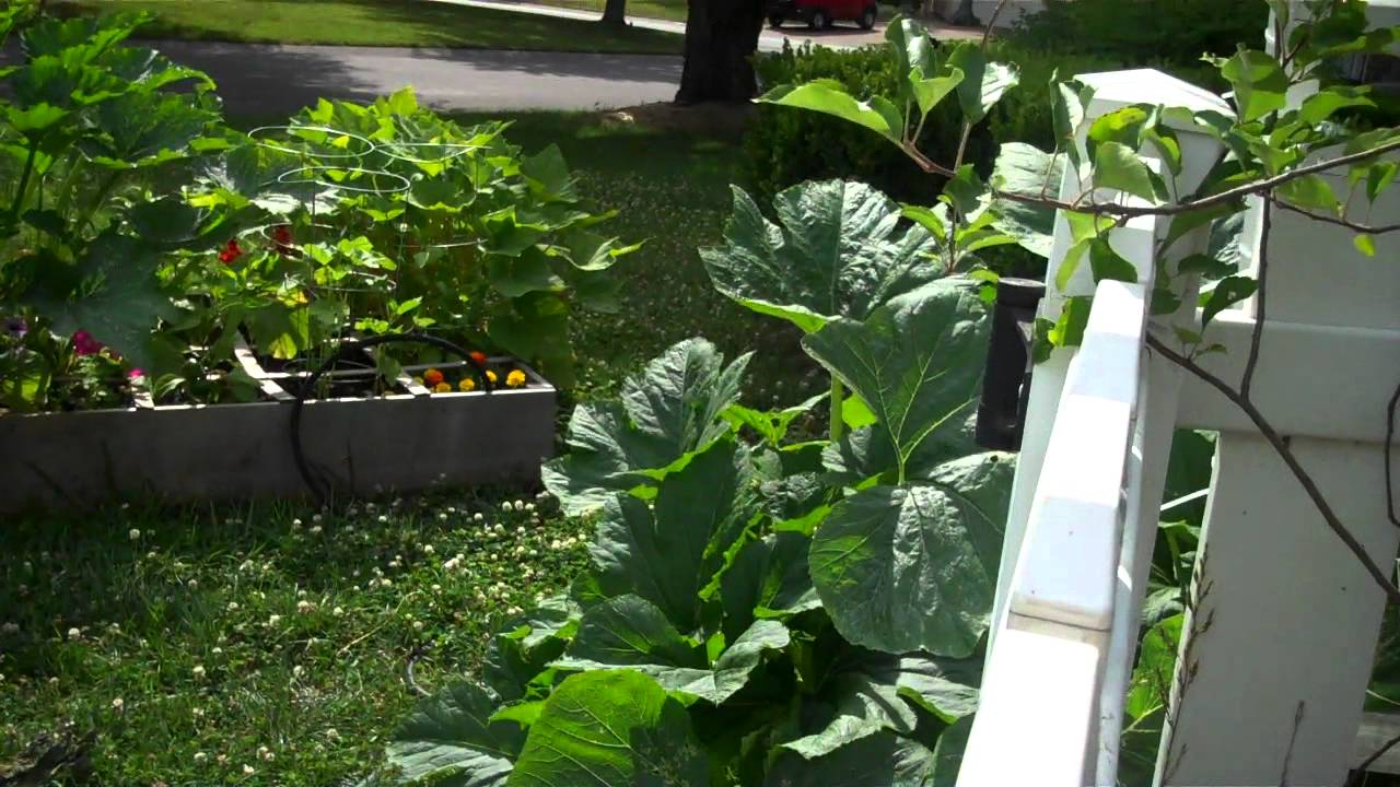 Growing Squash And Zucchini In A Raised Bed Or Square Foot Garden Mp4 You