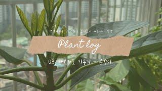[노지노지 식물일기] …