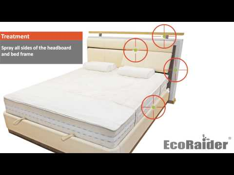 How to get rid of bed bugs by using EcoRaider