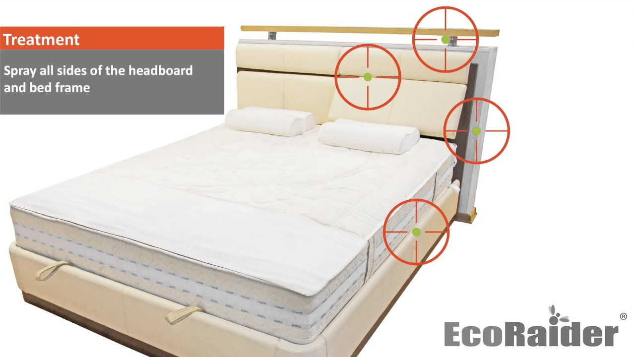 How to rid of bed bugs by using EcoRaider