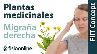 Cefalea y migraña o dolores de cabeza derechos - Plantas medicinales y remedios naturales