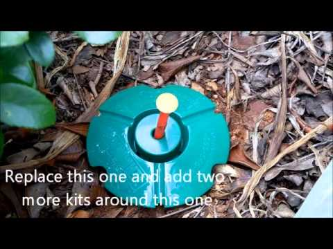 How To Detect Kill Termite Termite Detection Pest Control Termite Inspection Youtube