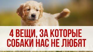4 вещи, за которые собаки нас не любят