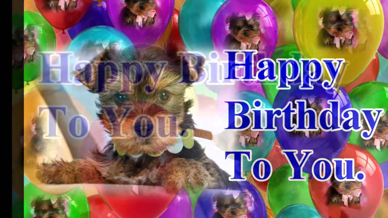 Happy Birthday To You W Yorkies YouTube