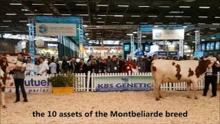 Jura Bétail Simagena 2017 Montbeliarde Show