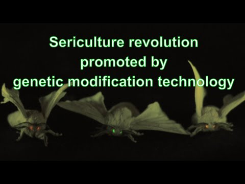 Sericulture revolution promoted by genetic modification technology