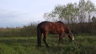 Конь Пасётся. Сельский Пейзаж
