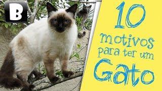 10 motivos para adotar um gato