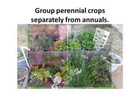 Your Florida Vegetable Garden   Plant Selection And Layout