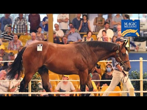 2015 Adelaide Magic Millions Yearling Sale Day 1