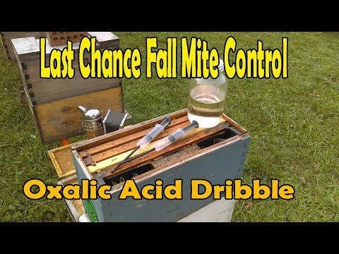 Last Chance Fall Mite Control / Oxalic Acid Dribble Method