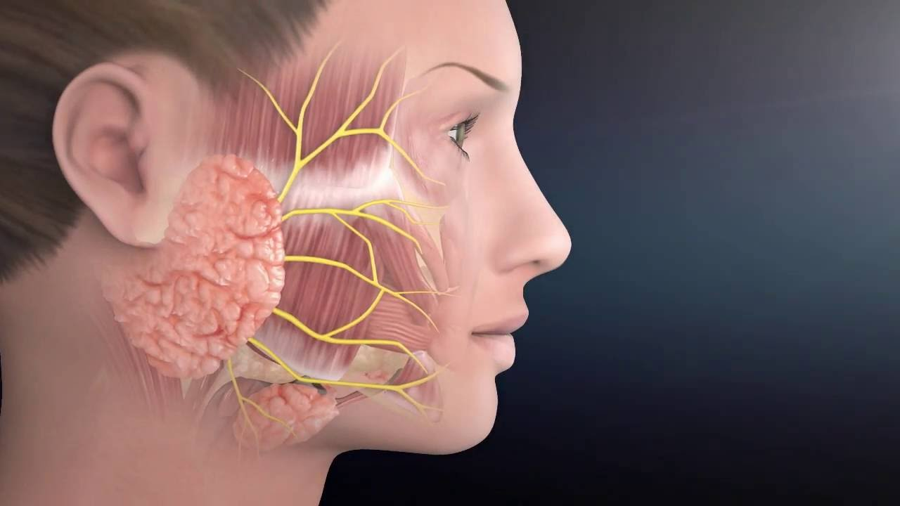 Parotid Surgery Animation