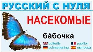 Русский язык с нуля. Насекомые. РКИ для всех.