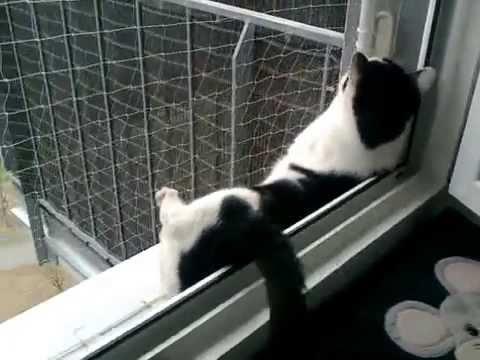 Callgirl Lucy in Roter Reizwäsche am Fenster gevögelt
