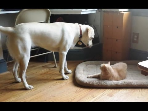 Cats Stealing Dog Beds Compilation 2015 [NEW]