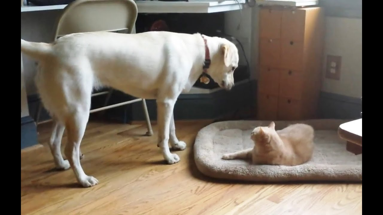 Cats Stealing Dog Beds Compilation 2015 [NEW] - YouTube