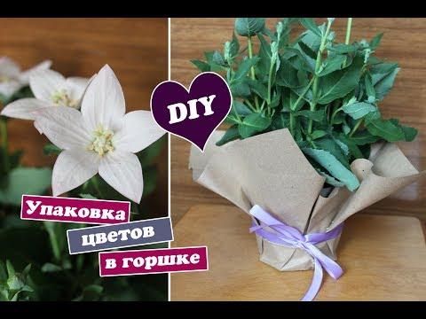 Как упаковать цветок в горшке в крафт бумагу / Упаковка подарков /
