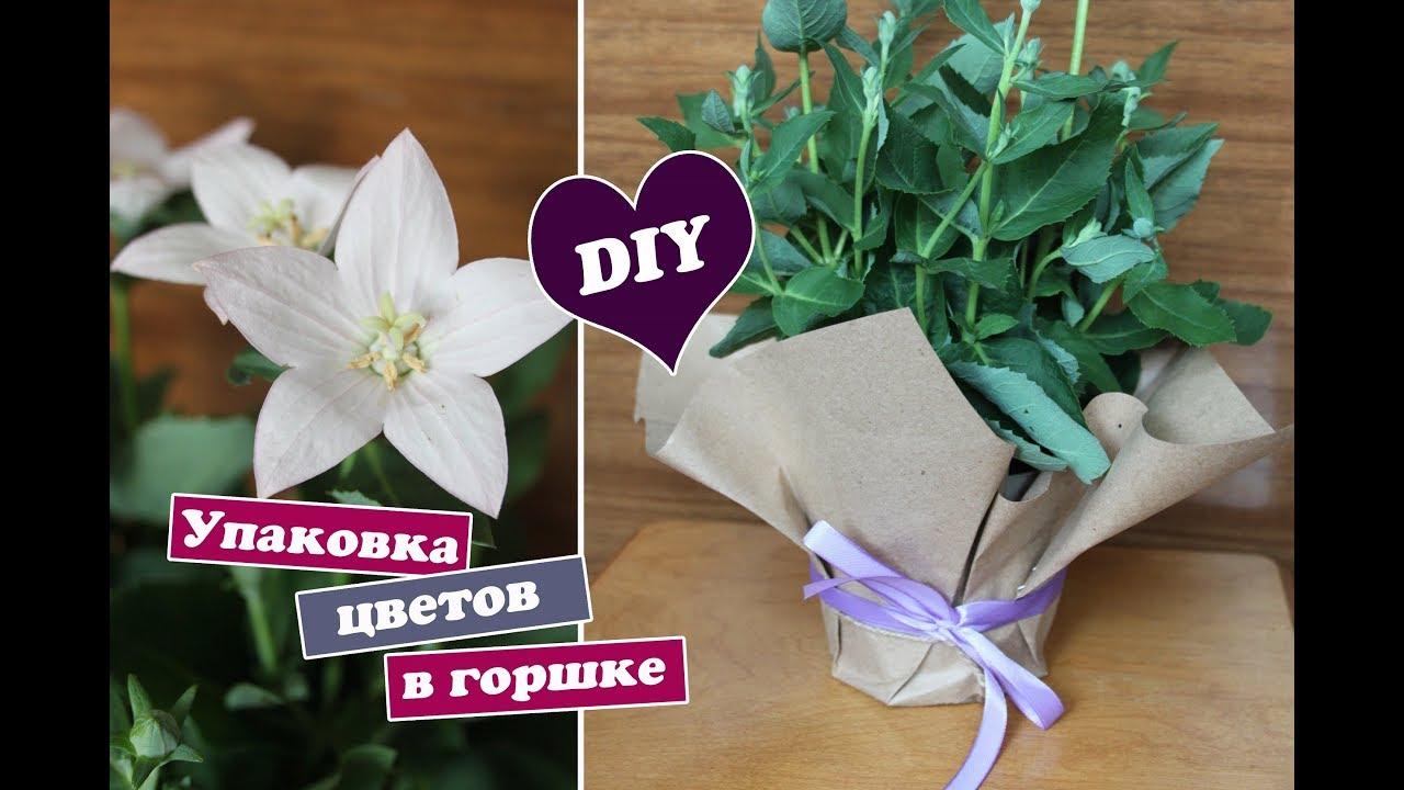 Как украсить цветок в подарок