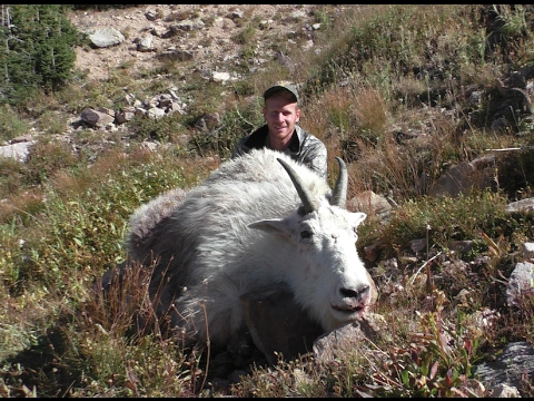 MTN GOAT HUNT With PACK LLAMAS!!!