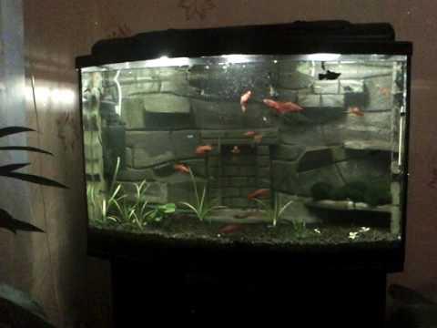 Фон для аквариума 3d своими руками