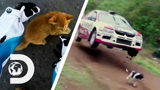 Animals On The Road That Could've Caused A Disaster! | Wheels That Fail