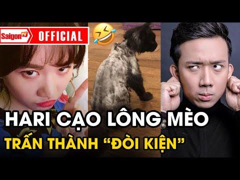 Hari Won đem Mèo Ra CẠO SẠCH LÔNG, Khi Về Nhà Trấn Thành Ngỡ Ngàng đứng Hình Mất 5 Giây