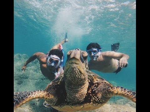 Excursiones riviera maya tortugas en akumal y tres Excursiones en riviera maya