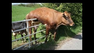 Funny moments with animals 😂 try not to laugh