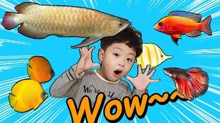 지환이의 어항에는 어떤 물고기가 있을까?  What fish would be in Jihwan's fishbowl?