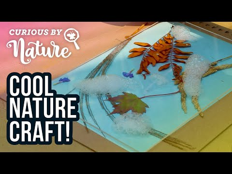 Nature Craft: Making Sun Prints | Curious By Nature