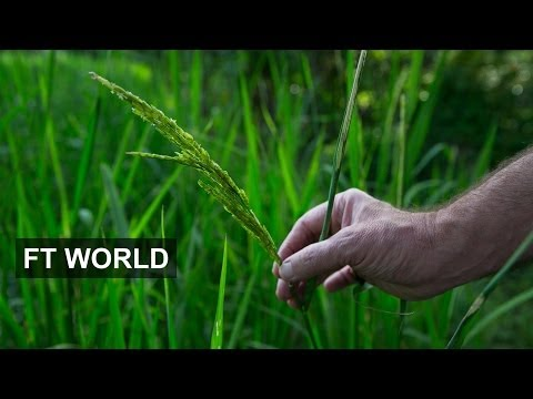 Political Crisis in Thailand - Rice Subsidy Schemes | FT World