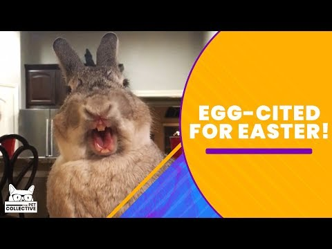 Ultimate Rabbits and Chicks Compilation (Easter Edition) | The Pet Collective