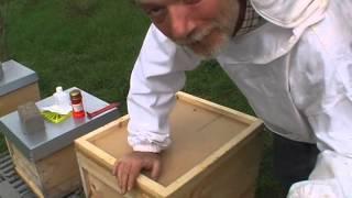 Auf der Suche nach den schreienden Bienen