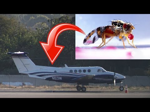 CAUGHT! Government Spying & Nuclear Insect Aerial Release Program