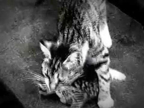 my edited video of three little kittens 1938 public domain movie film