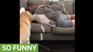 This super jealous dog won't let his owners cuddle without him!