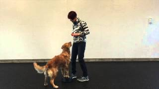 Canine Body Awareness Work For Competition And Rally Obedience