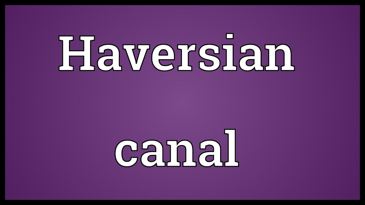 Haversian Canal Meaning Youtube