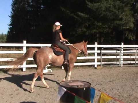 JT Antes Up, 16 year old Paint mare, trail course