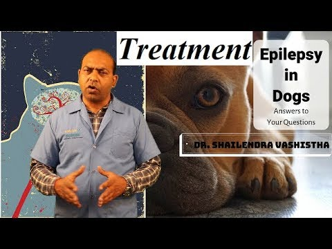 In Depth : Treatment For Epilepsy In Dogs ||VET For PET||