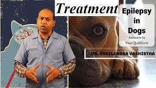 In Depth : Treatment for Epilepsy in Dogs   VET For PET  