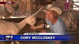 Cory's Corner: Desert Mirage Alpaca Ranch