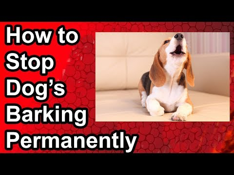 how-to-stop-dog's-barking-permanently-(people,window,night,bell)