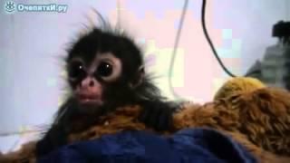 Смешная малышка обезьянка, видео кошки приколы бесплатно