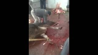 Задумайся! Вот что происходит, ради пол кило мяса.