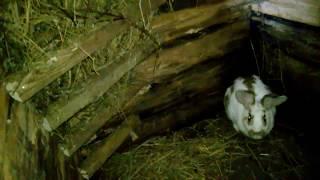 Ямное содержание кроликов, устройство, обзор и как сделал яму.