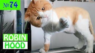 ПРИКОЛЫ 2017 с животными. Смешные Коты, Собаки, Попугаи // Funny Dogs Cats Compilation. Март №74