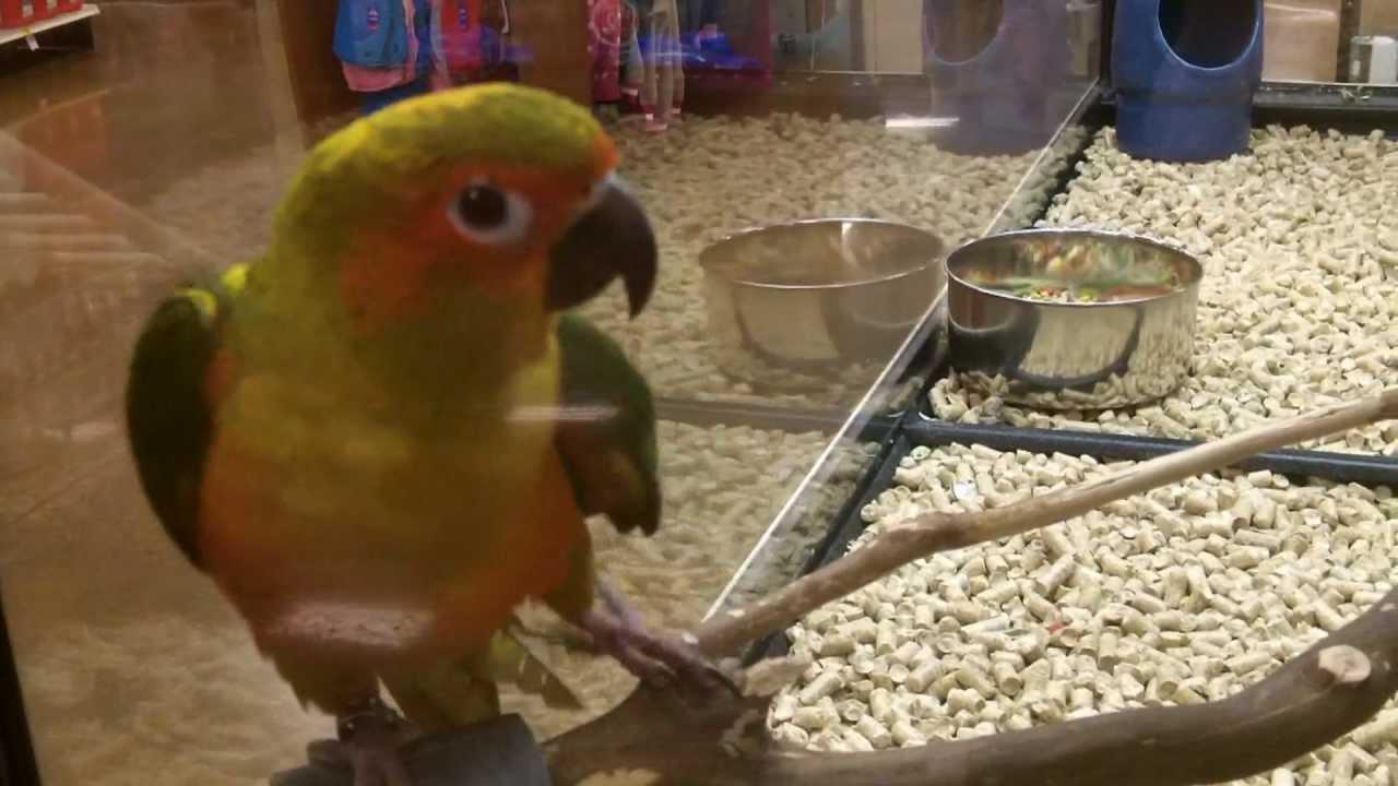 Pet Birds At Petco Petsmart Youtube